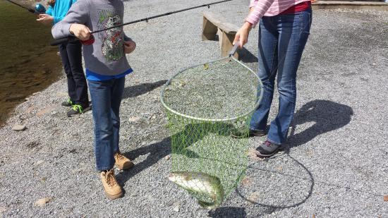 Grandfather Trout Farm: fresh trout!