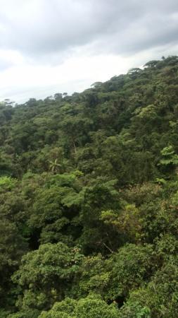 Braulio Carrillo National Park, Kosta Rika: rainforest