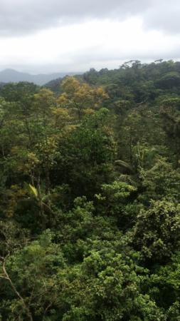 Braulio Carrillo National Park, Costa Rica: forest top view