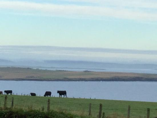 Deerness, UK: Another view from our window