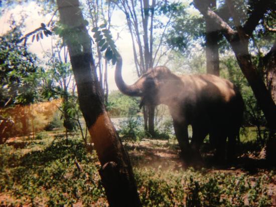 Safari World Open Zoo - Picture of Safari Park Open Zoo, Kanchanaburi - TripA...
