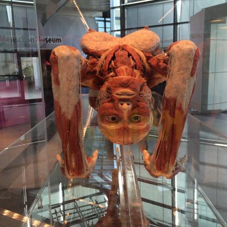 menneske museum berlin
