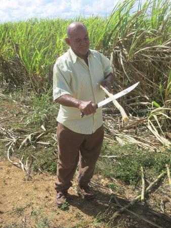Bayahíbe, República Dominicana: Canne da Zucchero