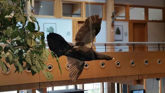 Feldberg, Deutschland: Haus der Natur