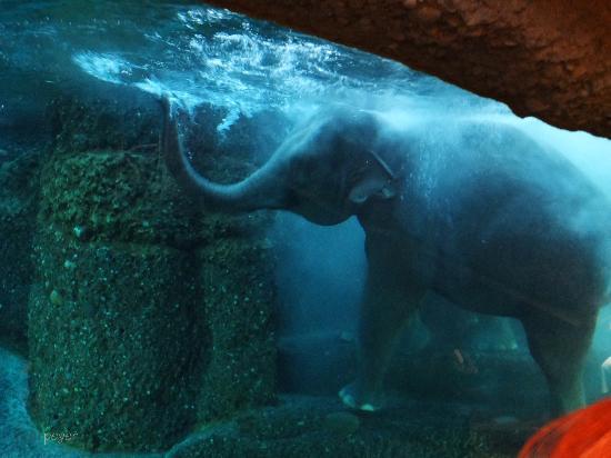 Zoo Zurich: Badezeit für die Elefanten