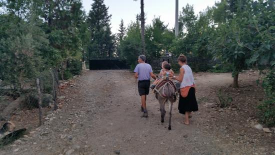 Sibel's Four Seasons Cafe & Restaurant: Donkey ride after dinner