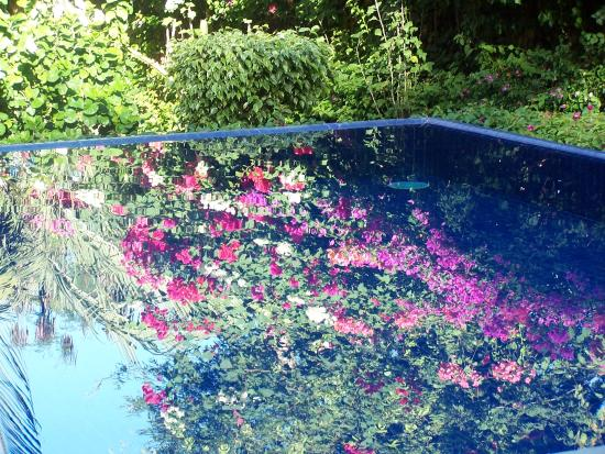 Hotel Casa Don Francisco: hotel pool
