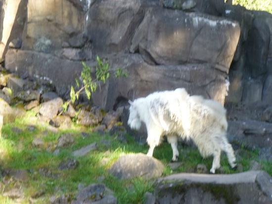 Oregon zoo discounts coupons