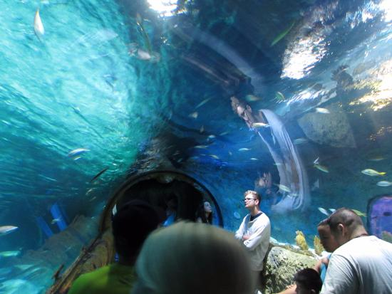 Aquario Picture Of Sea Life Orlando Aquarium Orlando Tripadvisor