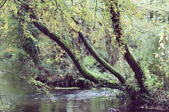 Winnall Moors Nature Reserve: winnal