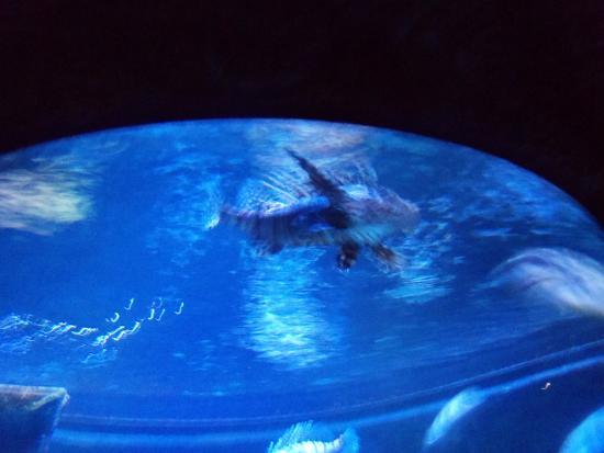 Incredible Family Fun Picture Of Sea Life Aquarium