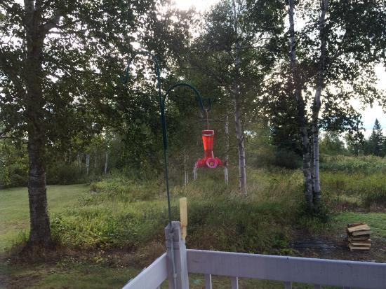 J. Gregers Inn: Back porch hummingbirds