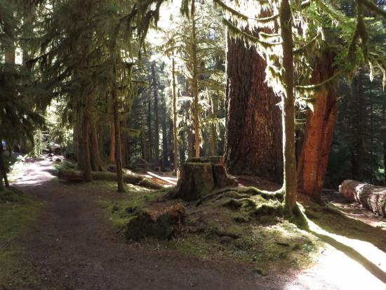 Sol Duc Campground: beautiful trees