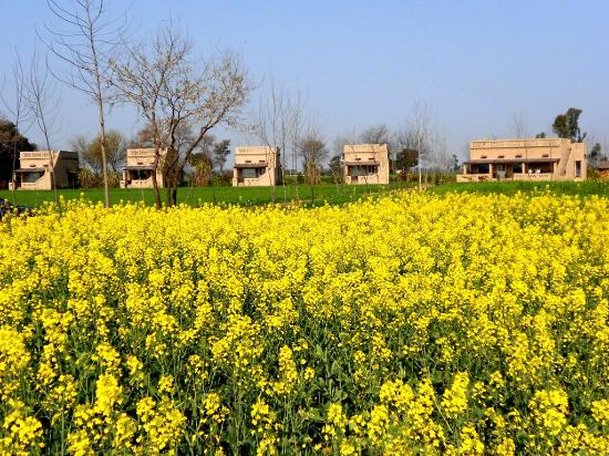 Punjabiyat: Four stand alone cottages in between the Farmlands!!
