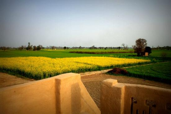 Gurdaspur District, India: Terrace!!