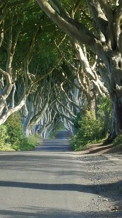 The Dark Hedges: Absolutely breathtaking, mother nature at her best!