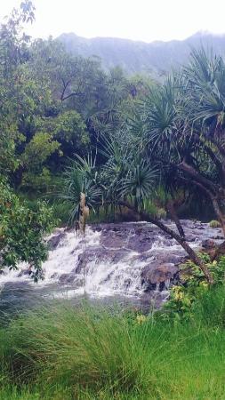 Kilauea, Havai: photo3.jpg