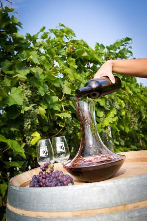 Comfort Inn Boucherville : The wineries