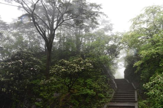 Leidong Ping : ハイキング道の脇に杜鵑花(左端が開花、中央は新芽)