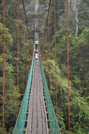 Danum Valley Conservation Area canopy walk & canopy walk - Picture of Danum Valley Conservation Area Sabah ...