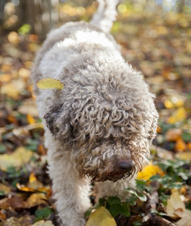 Ljugarn, สวีเดน: Lizzy-den bästa tryffelhunden!