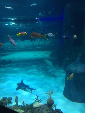 50th Aniversary Picture Of Sea Life Orlando Aquarium