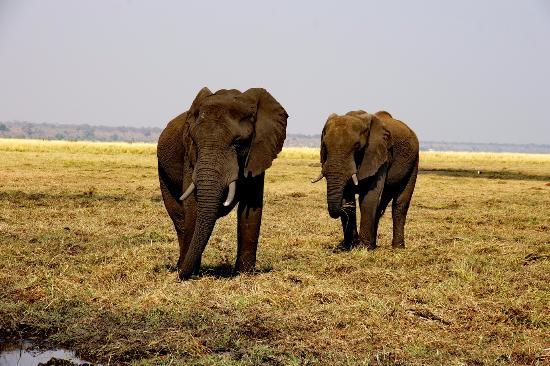 Khanondo Safaris and Tours
