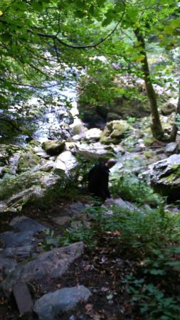 Fairy Glen Local Nature Reserve