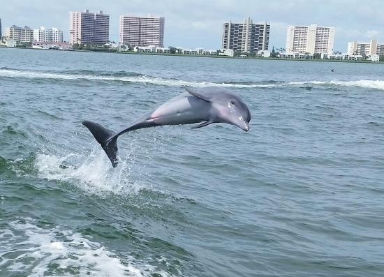 Little Toot Dolphin Adventures: Little Toot - Clearwater, Florida Trip 9.13.15