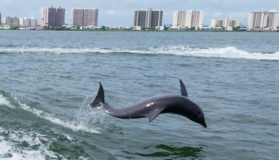 Little Toot Dolphin Adventures: Little Toot - Clearwater, Florida 9.13.15