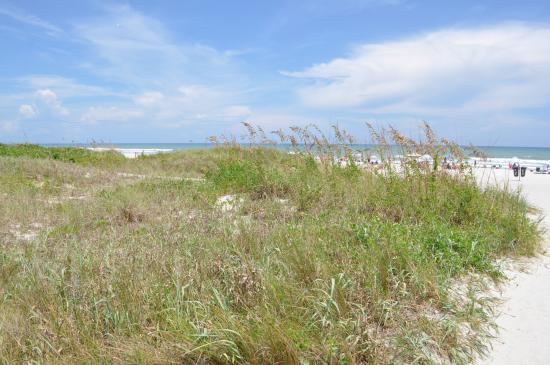 Playa Picture Of Lori Wilson Park Cocoa Beach Tripadvisor