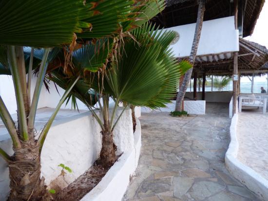 Barracuda Inn: zona piscina