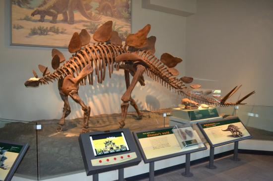 Dino Picture Of The Field Museum Chicago Tripadvisor