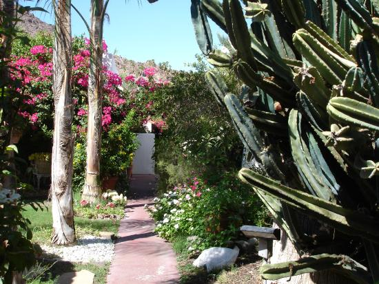 Amin Casa: Walkways lead through gardens.