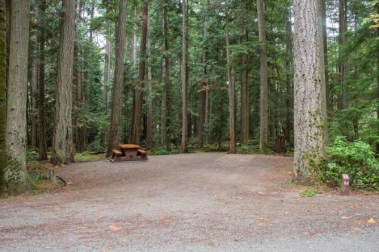 Porpoise Bay Provincial Park: Camping Spot