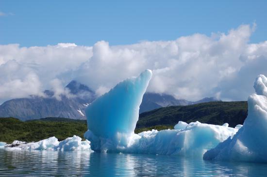 Allens Alaska Adventures : Icebergs (from kayaks) near Pederson Glacier