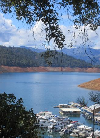 Shasta dam and the local deer picture of shasta lake for Lake shasta fishing