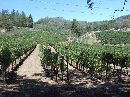 Angwin, كاليفورنيا: A view of some of the vineyard during our tour of the property.