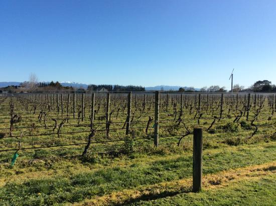 The Old Manse: Nestled against the vines