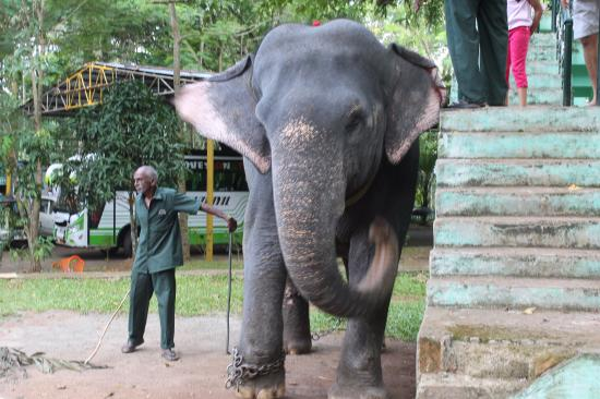 Konni Elephant Training Centre