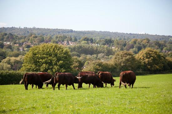 High Weald Area of Outstanding Natural Beauty
