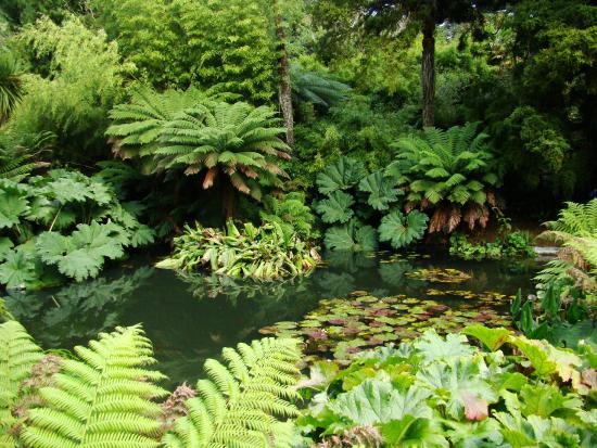 St Austell, UK: The Jungle