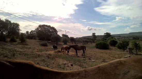 horses around hotel