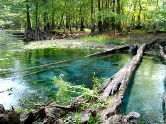 Marianna, FL: The river is a beautiful color that comes from springs like this that flow into it