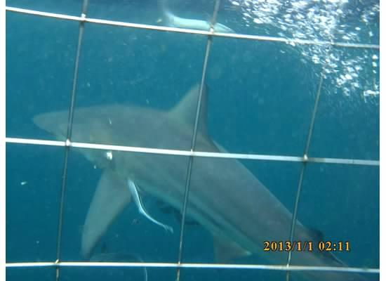 Aliwal Dive Centre : Sharks!