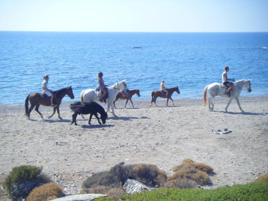 swimming with horses - Picture of Rhodescape, Apolakkia