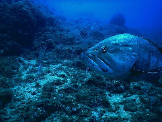 Costa Brava Divers