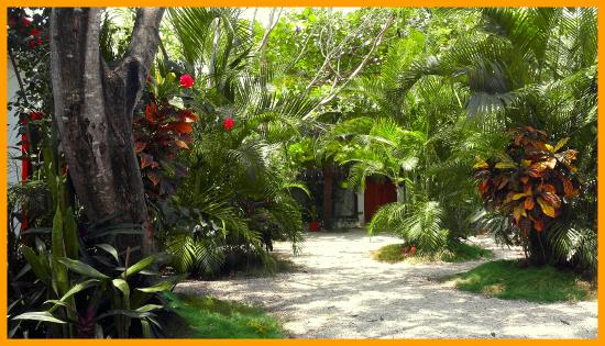 Pacha Tulum : Garden view