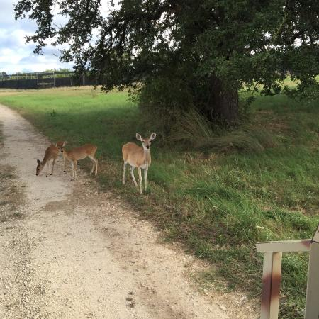 The Lodge at Fossil Rim : Cute little guys