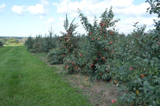 Hartford, MI: part of their orchard